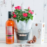 Pink Rose Plant Gift Set