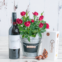 Red Rose Plant Gift Set