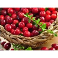 Cranberry 'Red Star' / Großfrüchtige Moosbeere / Gesundheitsbeere, Vaccinium macrocarpon 'Red Star' / 'Howes', Topfware
