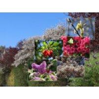 Blütensträucher und Ziergehölze - Bienen-Nährgehölz-Hecke aus 10 Pflanzen, 60-100 cm, Diese bienenfreundliche Hecke fällt auf!, Containerware
