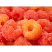 Himbeere 'Autumn Amber' ®, 30-40 cm, Rubus idaeus 'Autumn Amber' ®, Containerware