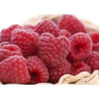 Himbeere 'Sanibelle' -S- ®, 30-40 cm, Rubus idaeus 'Sanibelle' -S- ®, Containerware
