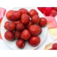 Erdbeere 'Sonata' ®, 15-20 cm, Fragaria 'Sonata' ®, Topfware