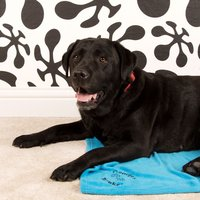 Personalised Pet Blanket - Blanket Gifts