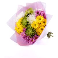 Floric Rainbow chrysanthemums