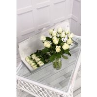 Floric 12 White Letterbox Roses, White