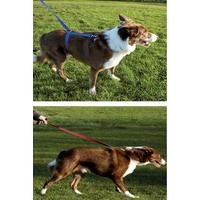 Instant Dog Training Lead