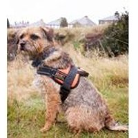 RAC Advanced Walking Harness