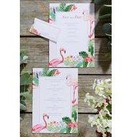 Flamingo Sample Pack