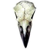 Reliquary Raven Skull