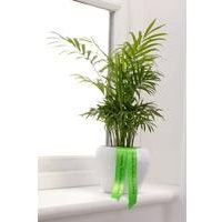 Personalised Parlour Palm With Ribbon