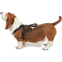 Boyz Toys Dog Harness - Large, Black