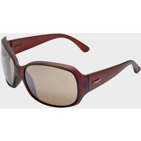 Sinner Amos Sunglasses, Brown/GRAD]
