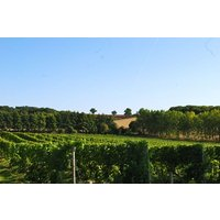 Chilford Hall Vineyard Tour and Tasting with Lunch for Two in Cambridgeshire - Lunch Gifts