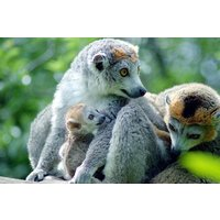 Meet The Animals At Bristol Zoo Including Entry For Two And Free Drink Picture