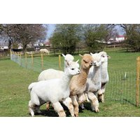 Lucky Tails Alpaca Farm Entry with Alpaca Walk for Two Adults a Two Children - Farm Gifts