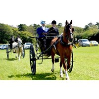 Learn To Drive A Horse And Carriage At Easter Hall Park Picture