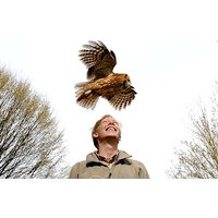 British Birds Of Prey Experience - Uk Wide Picture