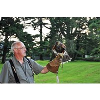 Birds Of Prey Experience For Two At North Devon Falconry Picture