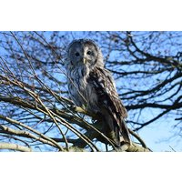 Vip Owl Experience At Sussex Falconry Picture