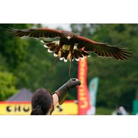 Vip Half Day Owl Or Falconry Experience At Sussex Falconry Picture