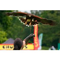 Vip Falconry Experience At Sussex Falconry Picture