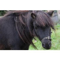 Pony Grooming Experience for Two at Animal Rangers - Rangers Gifts