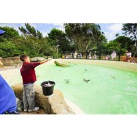 Penguin Feeding Experience At Drusillas Zoo Park Picture