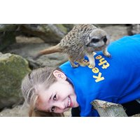 Zoo Keeper Experience At Drusillas Zoo Park Picture
