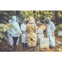 Beekeeping Experience For One At The London Bee Company Picture