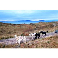 Husky Hiking Experience For One At Dorchar Aile Picture