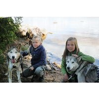 Husky Dog Sledding Experience For One At Dorchar Aile Picture