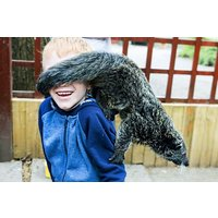 Half Day Zoo Keeper Experience For Two At Wills Wild Animal Encounters Picture