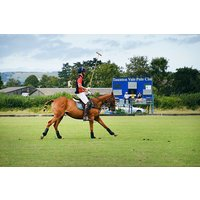 Polo Day Out with Lunch for One at Taunton Vale Polo Club - Polo Gifts