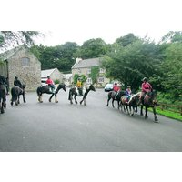 One Hour Horse Riding Session for One at Caffyns Farm - Horse Riding Gifts