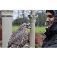 3 Hour Birds Of Prey Day - Special Offer Picture