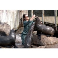 Zookeeper For A Day At Bristol Zoo With Entry For Two, Lunch And Souvenir Picture