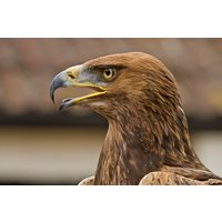 Half Day Falconry Experience For Two Picture