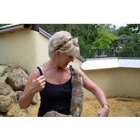 Meet The Meerkats For Two At Paradise Wildlife Park Picture
