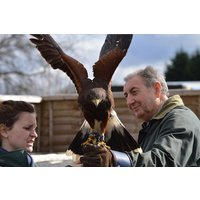Keeper For A Day For Two At Willows Bird Of Prey Centre Picture