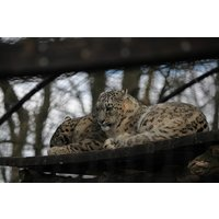 Meet the Carnivores for Two with Lunch at Lakeland Wildlife Oasis - Wildlife Gifts