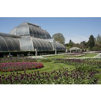 Kew Gardens Visit And River Cruise From Central London For Two