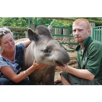 Tickle A Tapir Experience For Two Picture