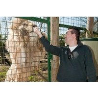 Feed Big Cats By Hand Experience Picture