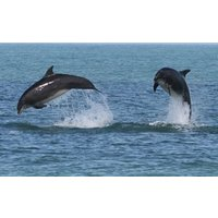 Dolphin Watching for Two - Animals Gifts