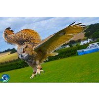 Entry to CJs Birds of Prey Experience for Two Adults and Two Children