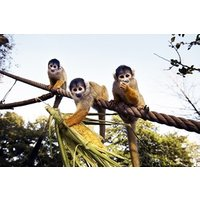 Family Entry To Zsl London Zoo Picture