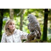 British Birds Of Prey Experience - UK Wide