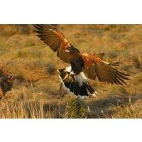 Hawk Walk In Derbyshire Picture