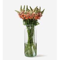 Flowerbx For Selfridges Snapdragons bunch of 20, Honey